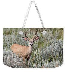 Weekender Tote Bag featuring the photograph Mule Deer by Michael Chatt