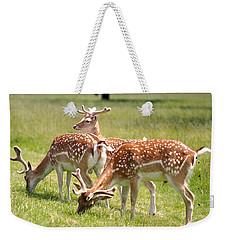 Multitasking Deer In Richmond Park Weekender Tote Bag