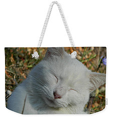 Weekender Tote Bag featuring the photograph Napping Barn Cat by Kathy Barney