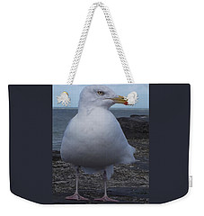 New Quay Gull  Weekender Tote Bag by John Williams