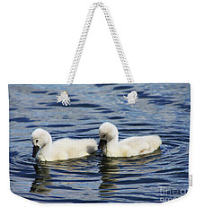 Newborn Mute Swans Weekender Tote Bag by Alyce Taylor