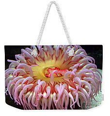 Weekender Tote Bag featuring the photograph Northern Red Anemone by Robert Meanor