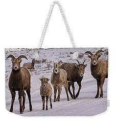 Weekender Tote Bag featuring the photograph Not Too Sheepish by Priscilla Burgers