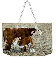 Weekender Tote Bag featuring the photograph Nursing Calf by Michael Chatt