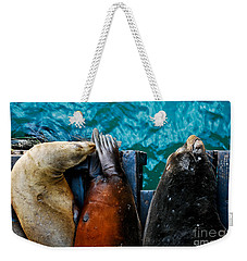 Odd Man Out California Sea Lions Weekender Tote Bag