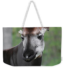 Weekender Tote Bag featuring the photograph Okapi #2 by Judy Whitton