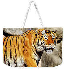 On The Prowl Weekender Tote Bag by Jason Politte