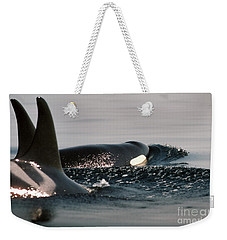 Weekender Tote Bag featuring the photograph Orcas/killer Whales Off The San Juan Islands 1986 by California Views Mr Pat Hathaway Archives