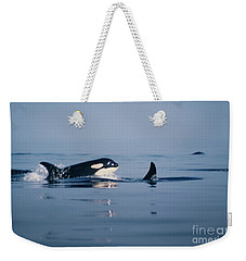 Weekender Tote Bag featuring the photograph Orcas Off The San Juan Islands Washington  1986 by California Views Mr Pat Hathaway Archives