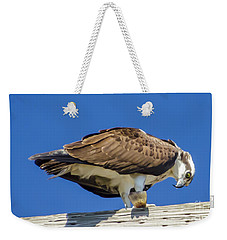Osprey Eating Lunch Weekender Tote Bag by Dale Powell