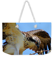 Weekender Tote Bag featuring the photograph Osprey Youth by Dianne Cowen