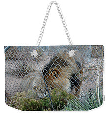 Out Of Africa Lions 4 Weekender Tote Bag