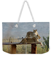 Out Of Africa Lions Weekender Tote Bag