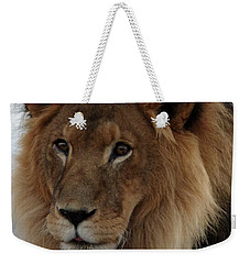 Out Ofafrica  Lion 4 Weekender Tote Bag