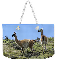 Patagonian Guanacos Weekender Tote Bag by Michele Burgess
