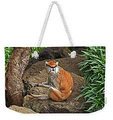 Weekender Tote Bag featuring the photograph Patas Monkey by Kate Brown