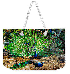 Weekender Tote Bag featuring the painting Peacocking by Omaste Witkowski