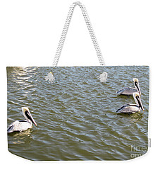 Weekender Tote Bag featuring the photograph Pelicans In Florida by Oksana Semenchenko