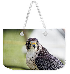 Weekender Tote Bag featuring the photograph Peregrine Falcon Bird Of Prey by Eleanor Abramson