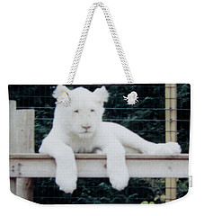Weekender Tote Bag featuring the photograph Philadelphia Zoo White Lion by Donna Brown