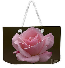 Weekender Tote Bag featuring the photograph Pink Rose by Meg Rousher