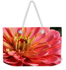 Weekender Tote Bag featuring the photograph Pink Zinnia Touched By Mornings Light by Bruce Bley