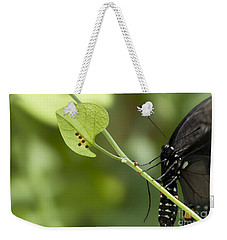 Weekender Tote Bag featuring the photograph Pipevine Swallowtail Mother With Eggs by Meg Rousher
