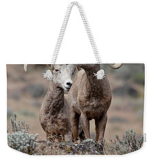 Weekender Tote Bag featuring the photograph Playfull Rams by Athena Mckinzie