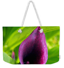 Plum Purple Calla Lilly Flower In The Garden Weekender Tote Bag