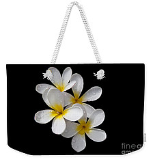 Weekender Tote Bag featuring the photograph Plumerias Isolated On Black Background by David Millenheft