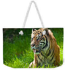 Weekender Tote Bag featuring the photograph Portrait Of A Sumatran Tiger by Jeff Goulden