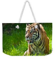 Portrait Of A Sumatran Tiger Weekender Tote Bag by Jeff Goulden