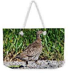 Weekender Tote Bag featuring the photograph Prairie Chicken Run by Janice Rae Pariza