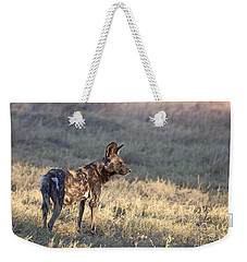 Weekender Tote Bag featuring the photograph Pregnant African Wild Dog by Liz Leyden