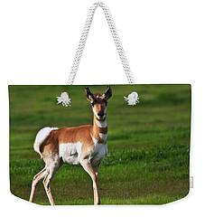 Pronghorn Antelope Weekender Tote Bag