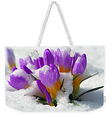Purple Crocuses In The Snow Weekender Tote Bag