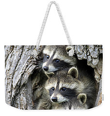Raccoon Trio At Den Minnesota Weekender Tote Bag by Jurgen & Christine Sohns
