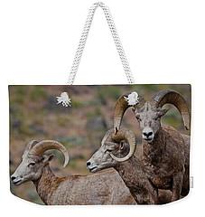 Rams In Three Weekender Tote Bag