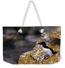 Razorbill Bird Weekender Tote Bag by Dreamland Media