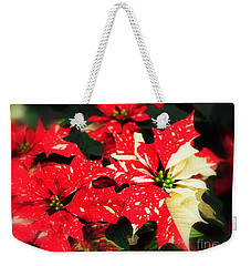 Weekender Tote Bag featuring the photograph Red And White Poinsettas by Elaine Manley