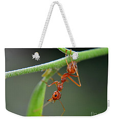 Red Ant Weekender Tote Bag by Michelle Meenawong
