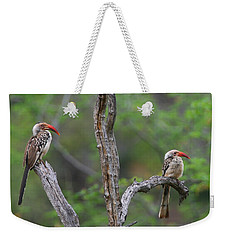 Red-billed Hornbills Weekender Tote Bag