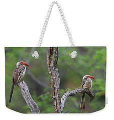 Red-billed Hornbills Weekender Tote Bag by Bruce J Robinson