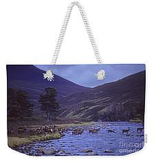 Red Deer Crossing A Highland River Weekender Tote Bag by Phil Banks