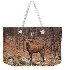 Red Deer Weekender Tote Bag