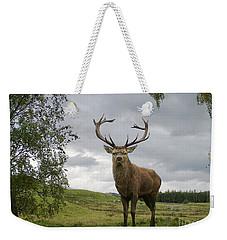 Red Deer Stag Weekender Tote Bag by Phil Banks