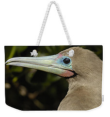 Red-footed Booby Close Up Galapagos Weekender Tote Bag by Pete Oxford