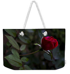Weekender Tote Bag featuring the photograph Red Knockout Rose by Ben Shields