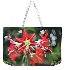 Weekender Tote Bag featuring the photograph Red Amaryllis by The Art of Alice Terrill