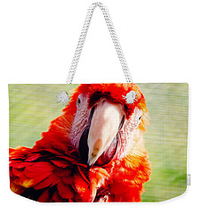 Red Macaw Weekender Tote Bag by Pati Photography